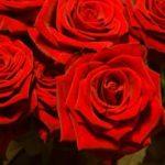 Zum Valentinstag: Blumen und ihre Bedeutung